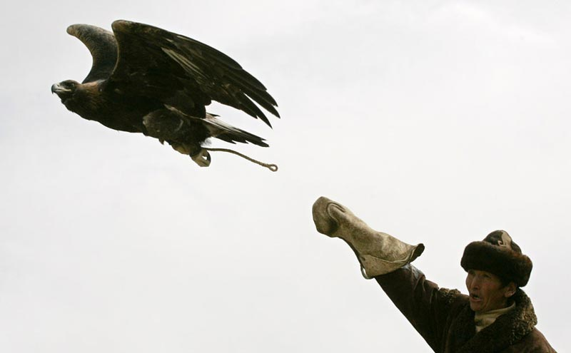 Hunting with Golden Eagles