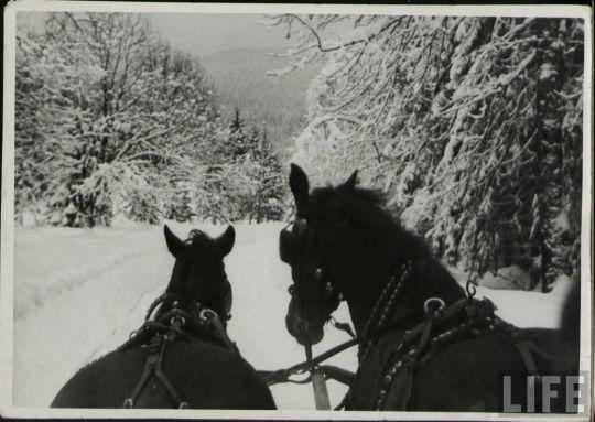 life_snow_scenes_01