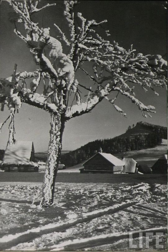 life_snow_scenes_14