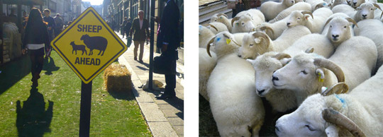 savile_row_sheep_1